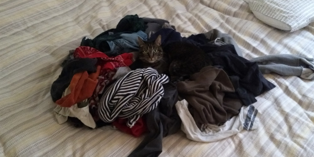 Cat looking out from the middle of a large pile of clothes.